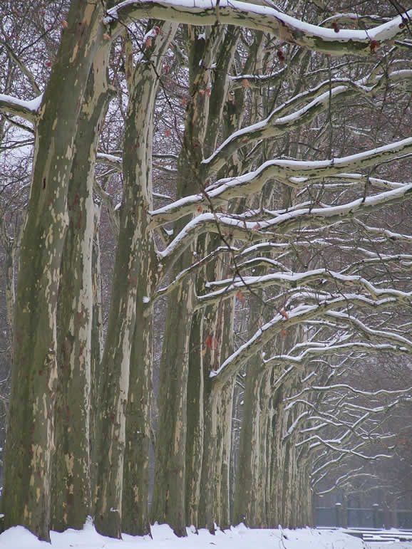 Photo: Trees in the Tierpark