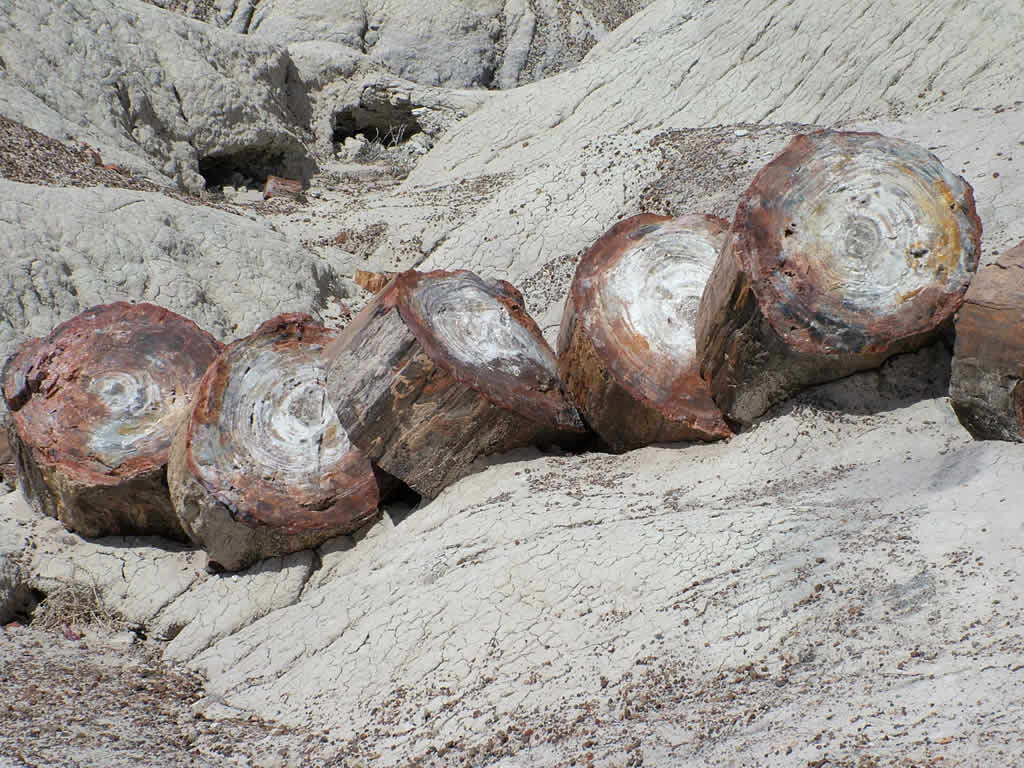Photo: Petrified Forest
